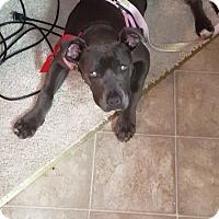 Adopt A Pet :: Macie - Sacramento, CA