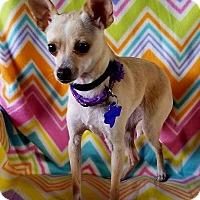 Adopt A Pet :: Bamby - San Antonio, TX
