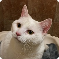 Adopt A Pet :: Scarlett - Fairfax, VA