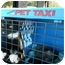 Photo 4 - Domestic Shorthair Cat for adoption in Orlando, Florida - Sam