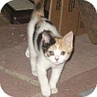 Adopt A Pet :: K-Sissy5-Hera - Colorado Springs, CO