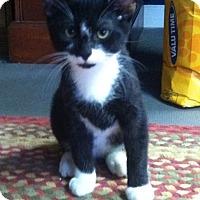 Adopt A Pet :: Fraser - Jacksboro, TN