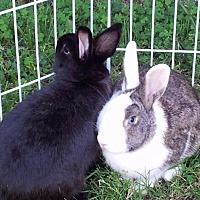 Adopt A Pet :: Fran - Los Angeles, CA