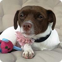 Adopt A Pet :: Ember - Marietta, GA