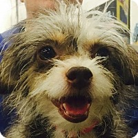 Adopt A Pet :: Lady - Minneapolis, MN