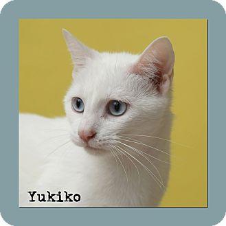 Domestic Shorthair Cat for adoption in Aiken, South Carolina - Yukiko