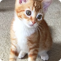 Adopt A Pet :: Milton - Lebanon, PA