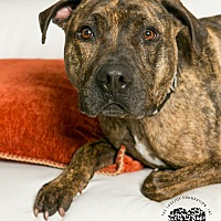 Adopt A Pet :: Griffin - Inglewood, CA