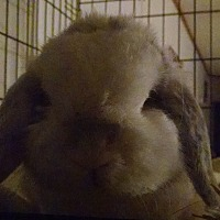 Adopt A Pet :: Dobby - Hahira, GA