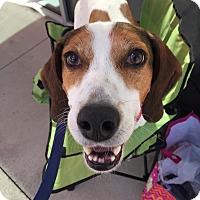 Adopt A Pet :: Murphy - Youngsville, NC