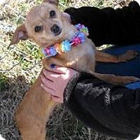 Adopt A Pet :: Sassy - Aurora, IL
