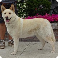 Adopt A Pet :: Tracy - Lathrop, CA