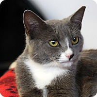Adopt A Pet :: Catherine - Sarasota, FL