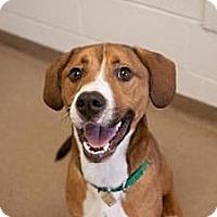 Adopt A Pet :: Travolta - Novelty, OH