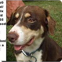 Adopt A Pet :: # 395-10 - ADOPTED! - Zanesville, OH