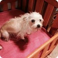 Adopt A Pet :: GLORY - Atascadero, CA