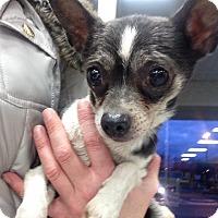 Adopt A Pet :: Jack - Pompton Lakes, NJ