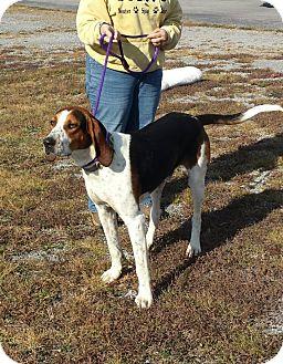 Coonhound Mix Dog for adoption in Coeburn, Virginia - HANK