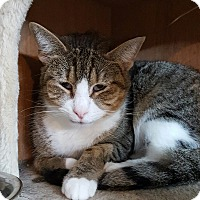 Adopt A Pet :: Saddie - Henderson, KY