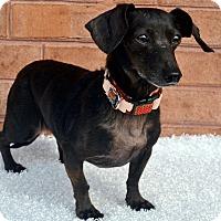 Adopt A Pet :: Princess - Bridgeton, MO