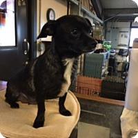 Adopt A Pet :: BARRETTA - Elk Grove, CA