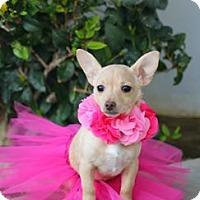 Adopt A Pet :: Violet - South El Monte, CA