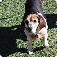 Beagle Mix Dog for adoption in Creston, California - Abby