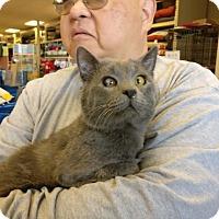 Adopt A Pet :: Bear - Avon, OH
