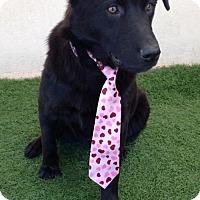 Adopt A Pet :: Freddy - San Diego, CA