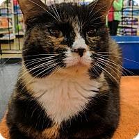 Adopt A Pet :: Marian - Sacramento, CA