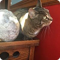 Adopt A Pet :: Brandy (Bonded Pair!) - Somerville, MA