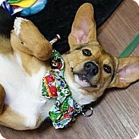 Adopt A Pet :: Wren - Pocahontas, AR