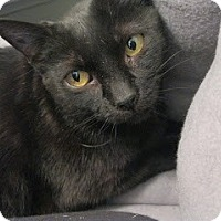 Adopt A Pet :: Petra - Chicago, IL