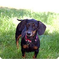 Adopt A Pet :: Taylor - San Jose, CA