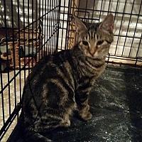 Adopt A Pet :: ZaZu - Ocala, FL