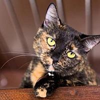 Adopt A Pet :: Lizzie - Santa Monica, CA