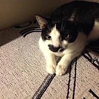 Adopt A Pet :: Loco (Courtesy Listing) - Hampton, VA
