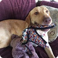 Adopt A Pet :: Hope - Jay, NY