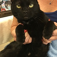 Adopt A Pet :: Nina - Sarasota, FL