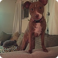 Adopt A Pet :: Rosemary - Chicago, IL