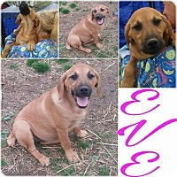 Adopt A Pet :: Eve - Trenton, NJ