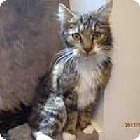 Adopt A Pet :: Marlo - Arlington, VA