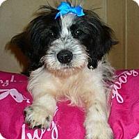 Adopt A Pet :: *Courtesy Post* Tiny (KY) - Vansant, VA