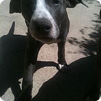 Adopt A Pet :: Kate - West Hills, CA