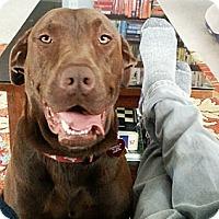 Adopt A Pet :: Percy - Franklin, TN