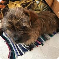 Adopt A Pet :: Bart - Avon, NY