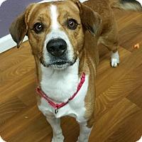 Adopt A Pet :: Clyde - Lisbon, OH