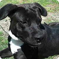 Adopt A Pet :: AA-Gypsy - Tyler, TX