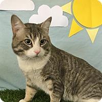 Adopt A Pet :: Clyde - Lloydminster, AB