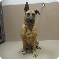 Adopt A Pet :: MILEY - Reno, NV